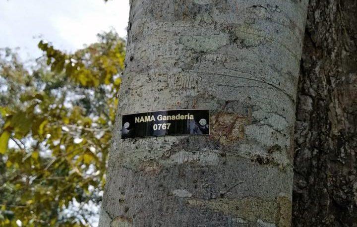 Foto de un arbol con una placa que dice NAMA Ganadería.